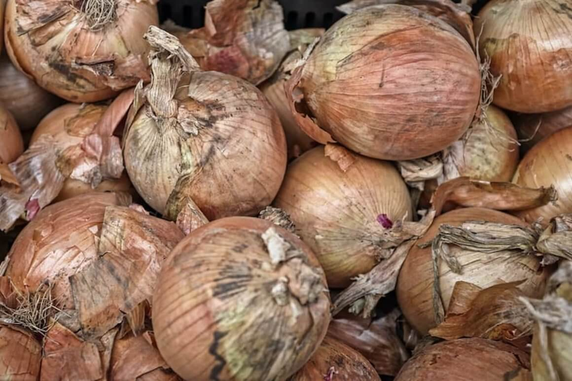 Recognize the signs of a bad onion