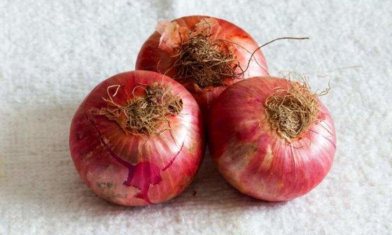 how long do onions last