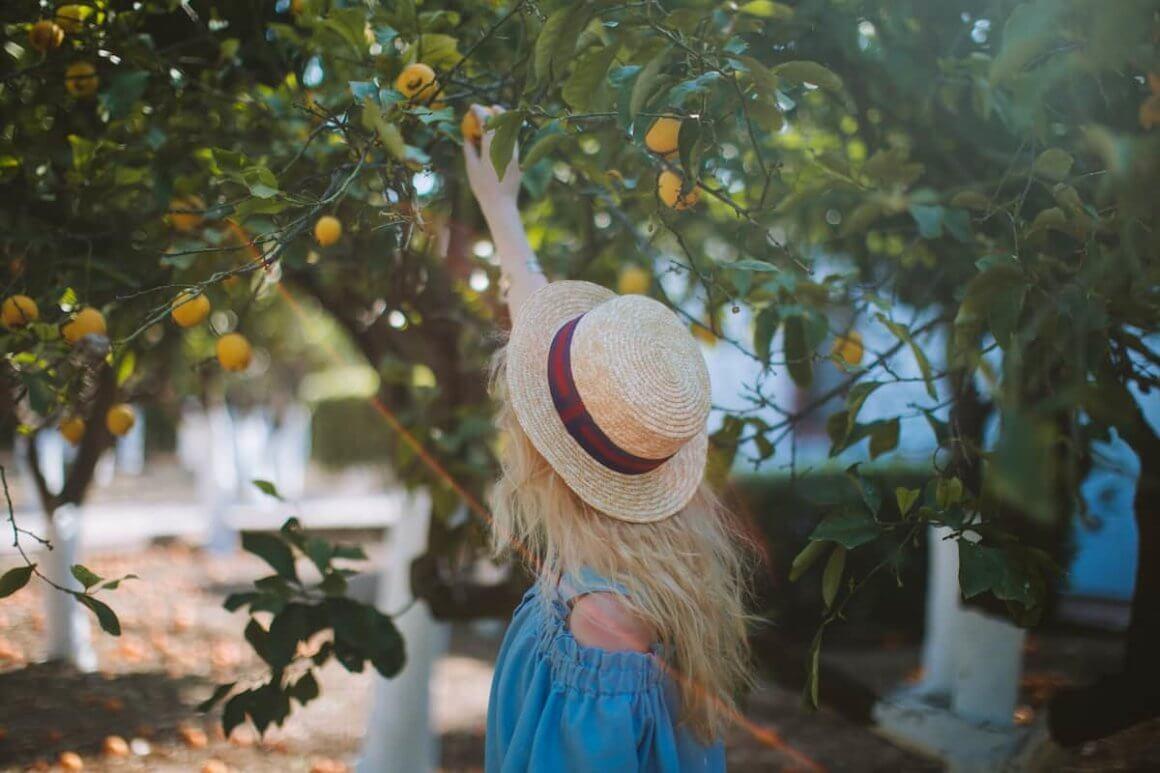 How does your lemon tree grow